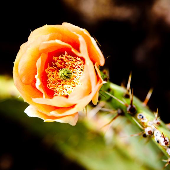 Southwest Botanical Photography