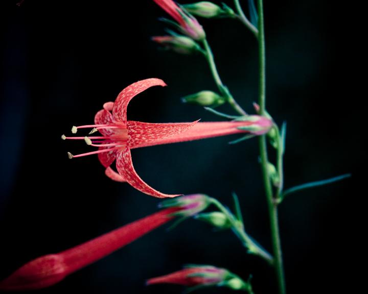 Arizona Botanical Photography
