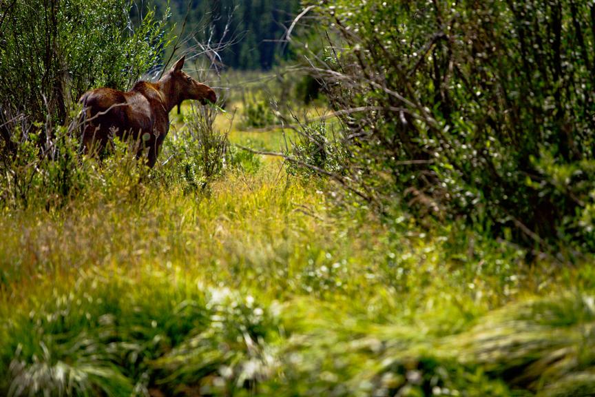 Colorado Nature Photographer
