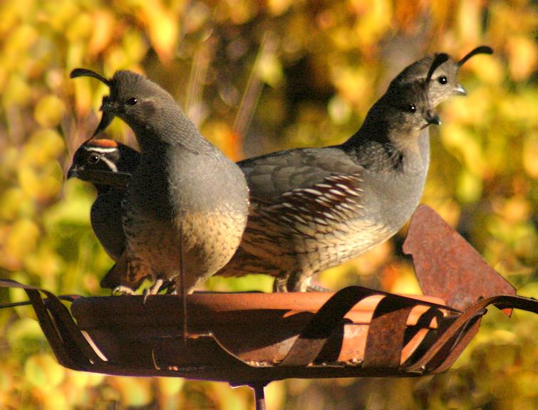 Arizona Nature Photography