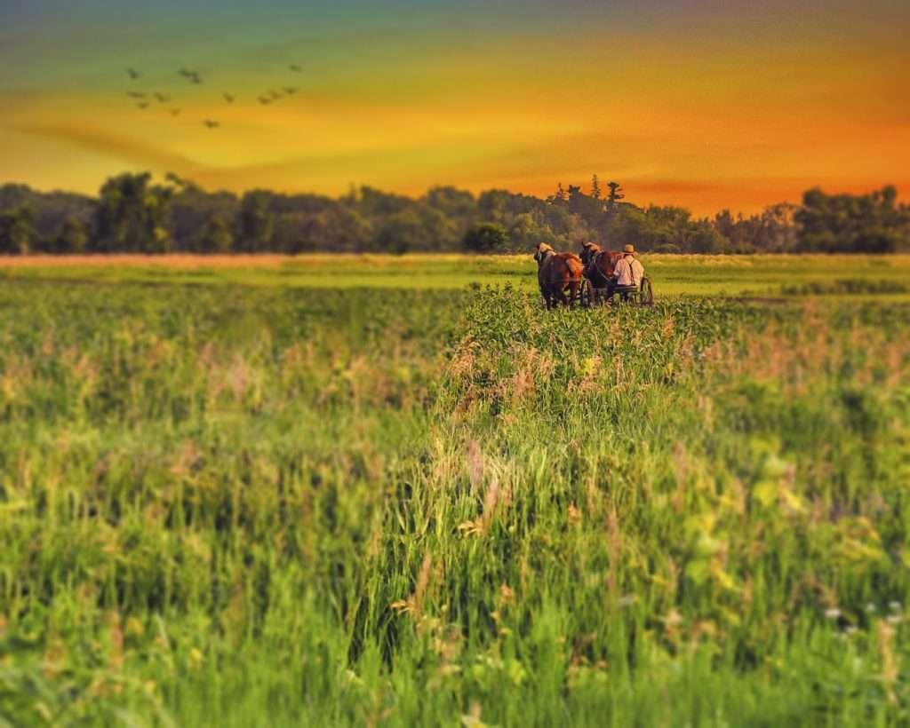 Iowa Proffesional Photography